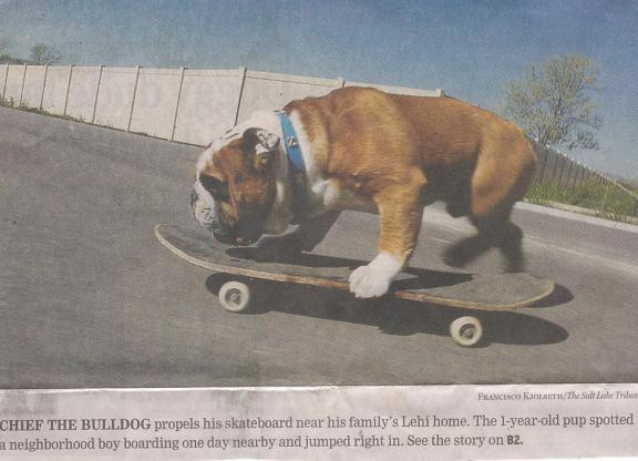 dogskatecaption.jpg