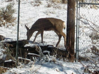 blog-ready-deer.jpg