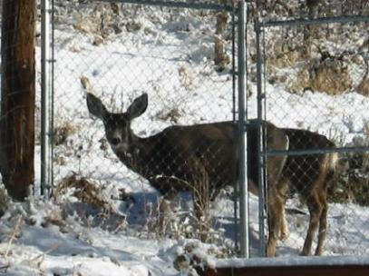 deer-for-blog.jpg