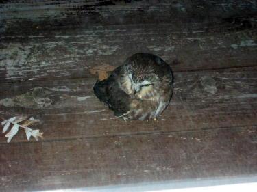 owl-blog-ready-2.jpg