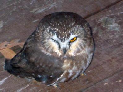 owl-winking-for-blog.jpg