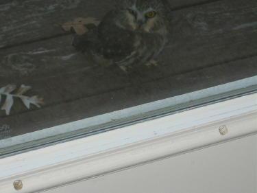owl-with-both-eyes-blog-ready-open-3.jpg