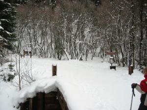 snowshoe-9.jpg