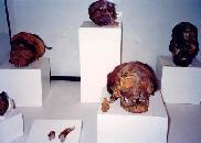 mummies-ica-regional-museum1