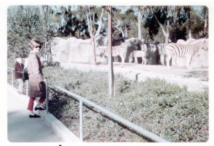 san diego zoo january 1969