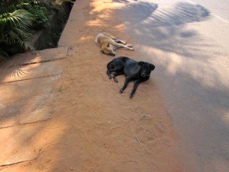 how to train a sheepdog to lie down